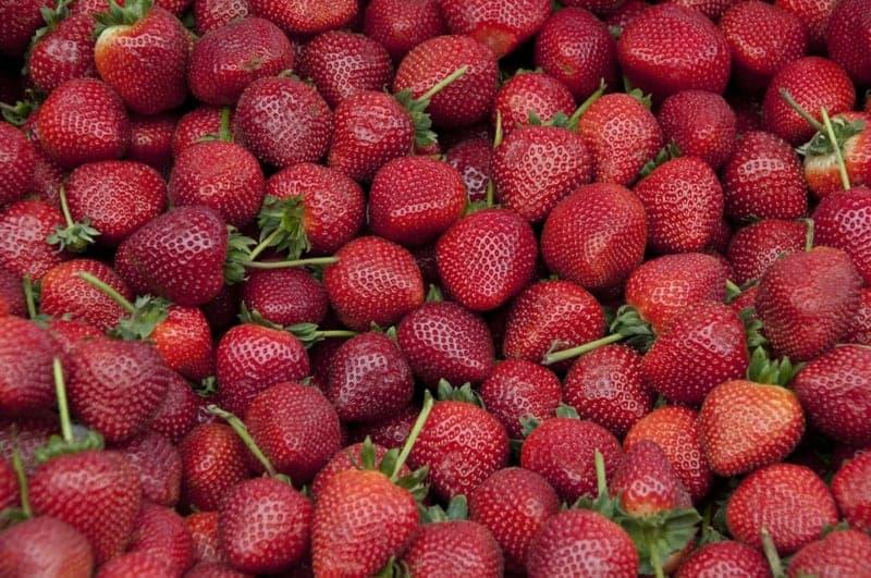 Abwehrkräfte stärken Erdbeeren essen