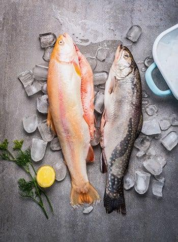 Welche Fischsorten sind am gesündesten